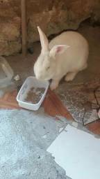 Vendo uma coelha