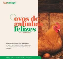 Ovos agroecologico/orgânico