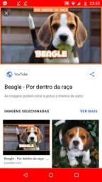 Procuro namorada para o Beagle .