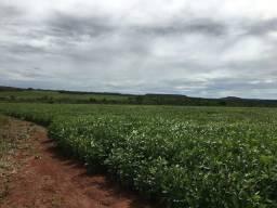 Fazenda Região Barra   190 Alqueires   Na lavoura   Analisa prazos
