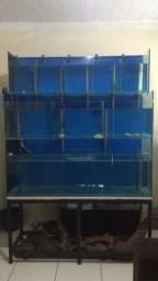 Título do anúncio: Bateria de aquarios