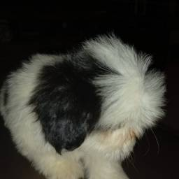 Título do anúncio: Cachorra