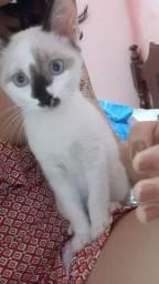 Gato adoção responsável