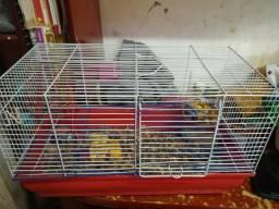 Vendo hamster Anão russo Macho 80,00 Preço a negócia