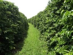 Fazenda em monte carmello 220 hectares