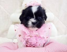 Filhotinha linda de lhasa fêmea preta e branca