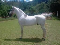 Cavalo - Pampa e MM - Campeao Marcha Nacional