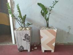 Título do anúncio: Vasos de plantas