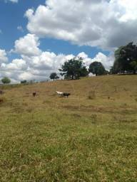 Vende se sítio na terra do forró IBICUÍ Bahia