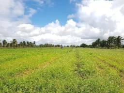 Granja Ceará-Mirim 2 Hectares, 20.000m2 Desmatada, Escritura Pública