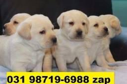 Canil Filhotes Cães Top BH Labrador Pastor Rottweiler Dálmata Golden Akita