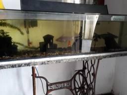 Aquario conservado