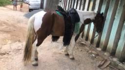 Vendo cavalo mestiço com quarto de milha