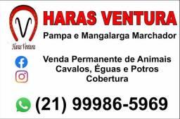 Égua Pampa - Campeã Nacional 2019