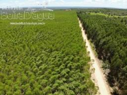 Fazenda 1396 Hectares Eucalipto Reflorestamento
