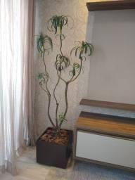 Título do anúncio: Planta Decorativa
