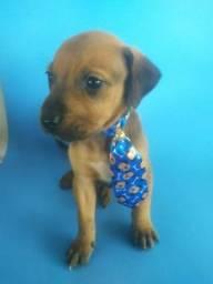 Título do anúncio: Doação de cachorro DIVINÓPOLIS E REGIÃO