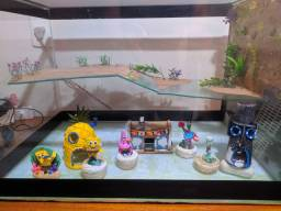 Aquaterrario, aquário tartaruga