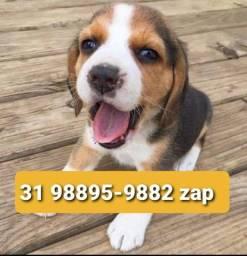 Título do anúncio: Cães Filhotes Lindos BH Beagle Poodle Maltês Yorkshire Lhasa Shihtzu
