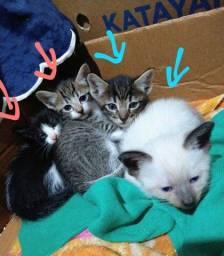 Título do anúncio: Doa-se 4 Gatinhos