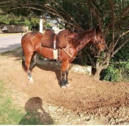 Venda De Cavalo Caramelo