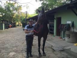 Cavalos curso de montaria