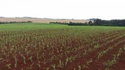 Fazenda à venda, 4404400 m² por R$ 24.000.000 - Rural de Cantagalo - Cantagalo/PR
