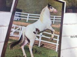 Potros Paint Horse