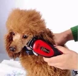 Maquina de tosar cães quirui