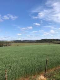 Propriedade rural à venda lavoura e pecuária
