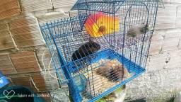 Hamster sírio libanês unidade