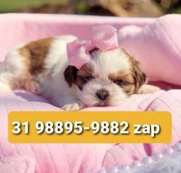 Título do anúncio: Cães Filhotes Miniaturas em BH Lhasa Maltês Beagle Yorkshire Basset Shihtzu