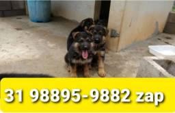 Título do anúncio: Filhotes Cães Incríveis BH Pastor Akita Labrador Golden Chow Chow