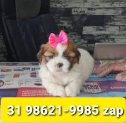 Título do anúncio: Cães Filhotes Lindos em BH Shihtzu Maltês Lhasa Beagle Basset Yorkshire