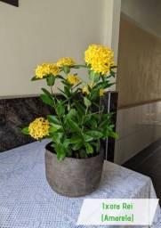 Vende-se muda de frutas e flores jardinagem e paisagismo
