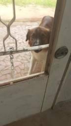Doa se um cachorro