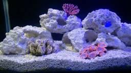 Coral artificial aquário