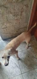 Cachorro ( doação)