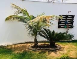 Título do anúncio: Coqueiro ANÃO E Palmeira CIKA