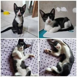 Gatinhos frajolas para adoção