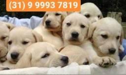 Título do anúncio: Canil temos labrador, pastor alemão, dálmatas, beagle, boxer