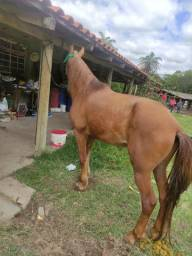 Título do anúncio: Vendo cavalo