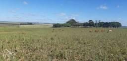 Chácara à venda em Zona rural, Rosário do sul cod:10132
