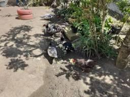 6 Patos