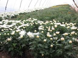 Preta preparada para mudas, planta,plantas jardim jardinagem jardinagens