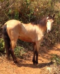 Título do anúncio: Cavalo Baio MM Castrado