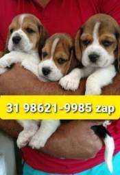 Título do anúncio: Filhotes Cães Perfeitos BH Beagle Shihtzu Basset Yorkshire Maltês Poodle