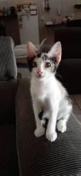 Doação Responsável de gatinhos!