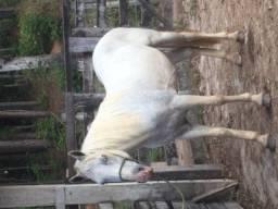 Título do anúncio: Cavalo mangalarga Machado
