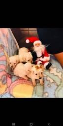 Poodles toy machinhos